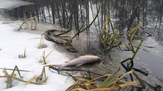 Экологическое бедствие в черноземной зоне России